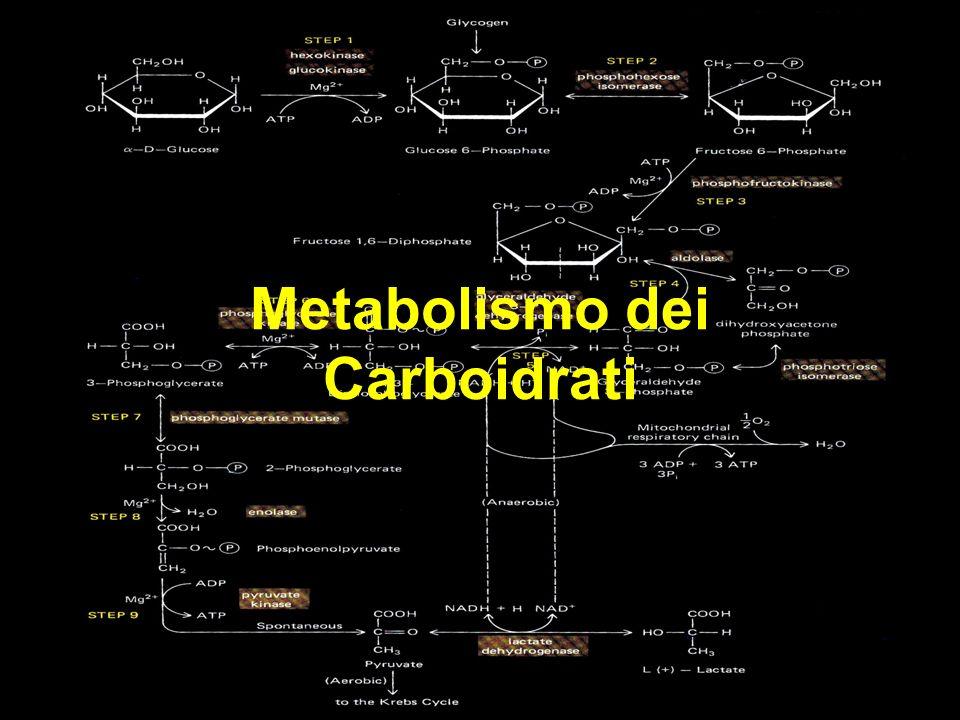 Metabolismo dei Carboidrati