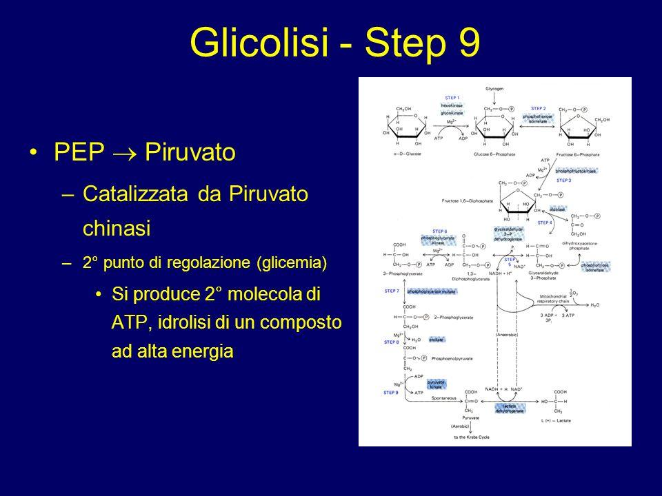 Glicolisi - Step 9 PEP  Piruvato Catalizzata da Piruvato chinasi