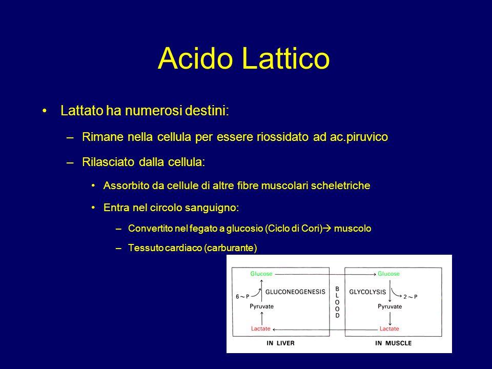 Acido Lattico Lattato ha numerosi destini: