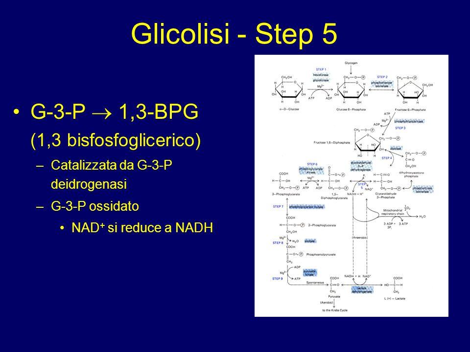 Glicolisi - Step 5 G-3-P  1,3-BPG (1,3 bisfosfoglicerico)