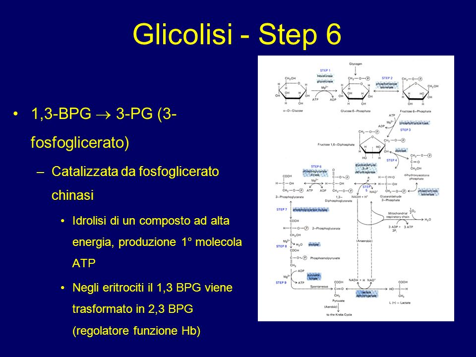 Glicolisi - Step 6 1,3-BPG  3-PG (3-fosfoglicerato)
