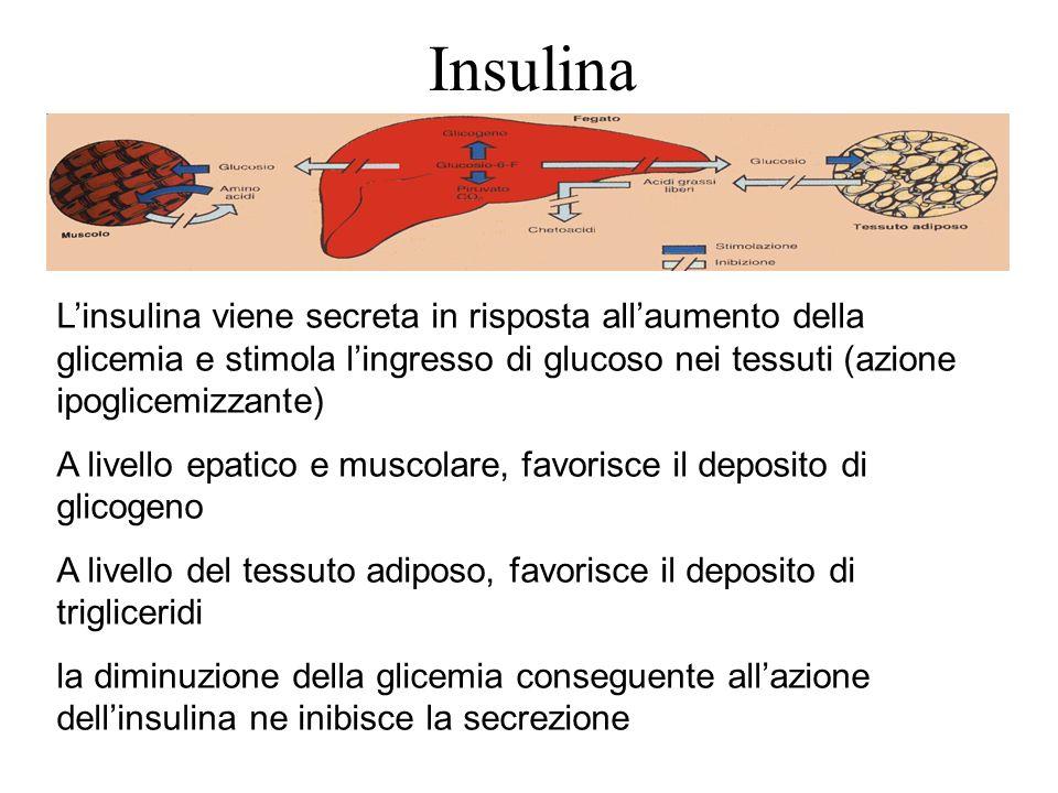 Insulina L'insulina viene secreta in risposta all'aumento della glicemia e stimola l'ingresso di glucoso nei tessuti (azione ipoglicemizzante)