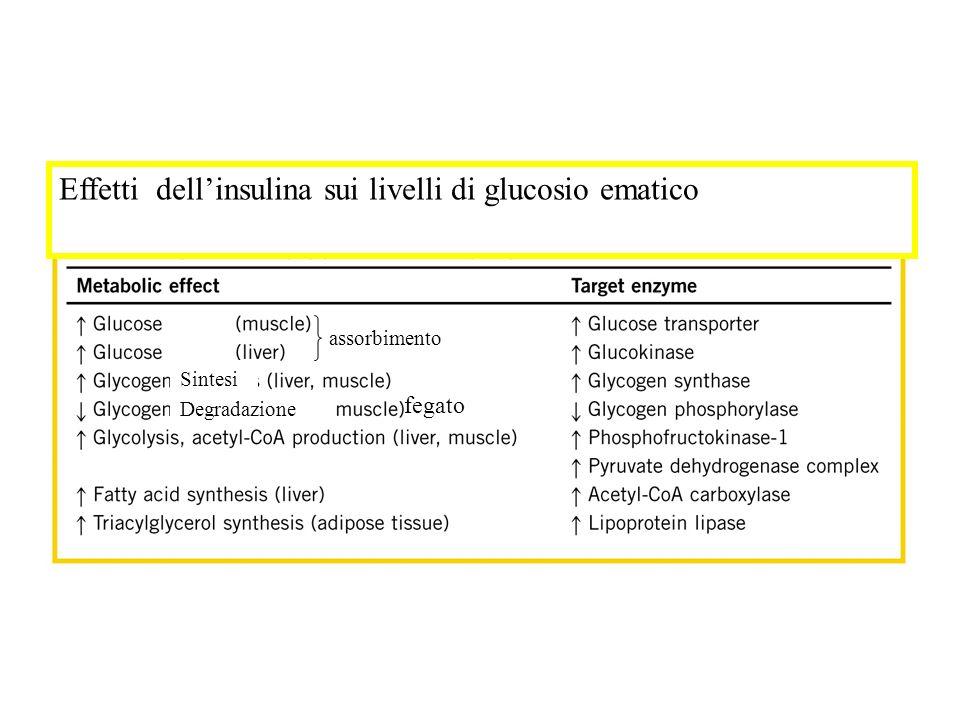 Effetti dell'insulina sui livelli di glucosio ematico