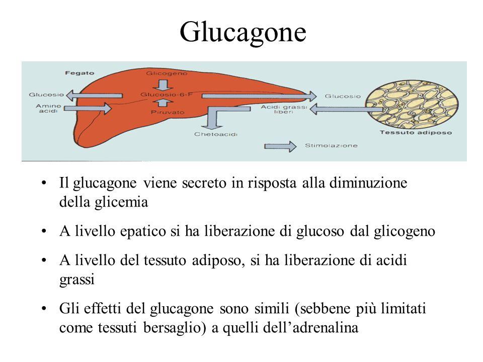 Glucagone Il glucagone viene secreto in risposta alla diminuzione della glicemia. A livello epatico si ha liberazione di glucoso dal glicogeno.