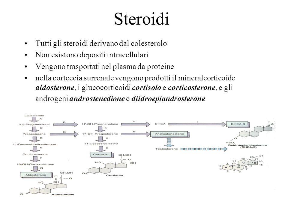 Steroidi Tutti gli steroidi derivano dal colesterolo