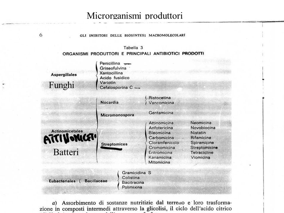 Microrganismi produttori