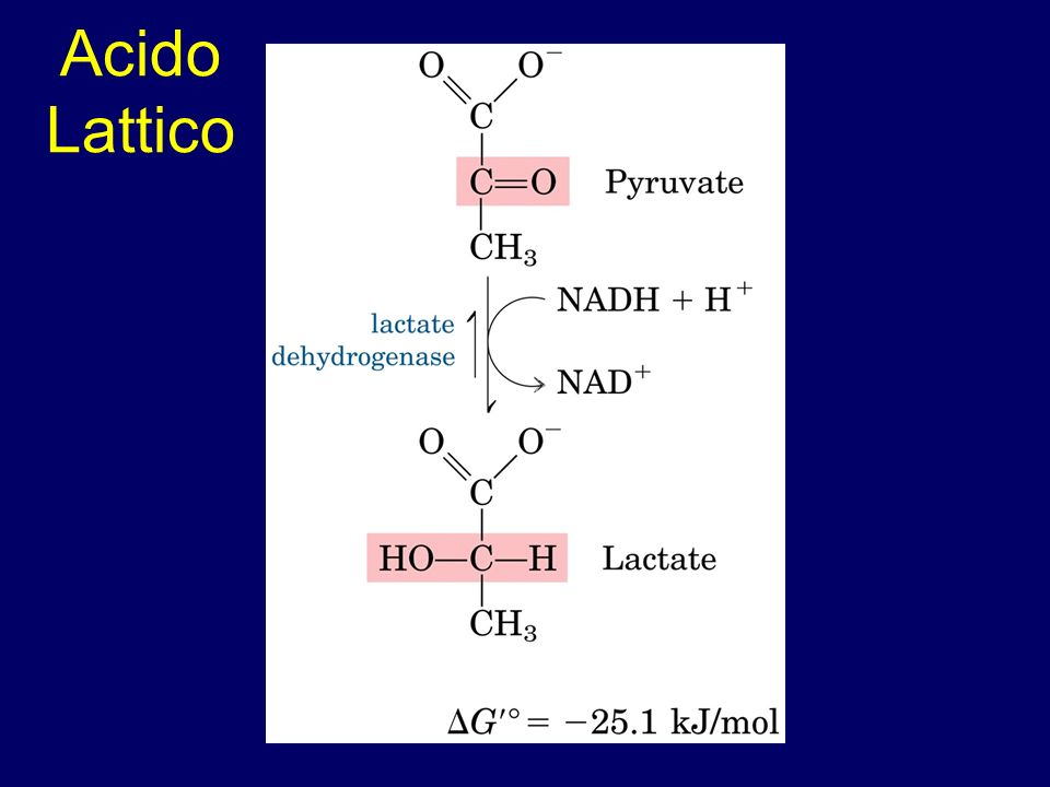 Acido Lattico