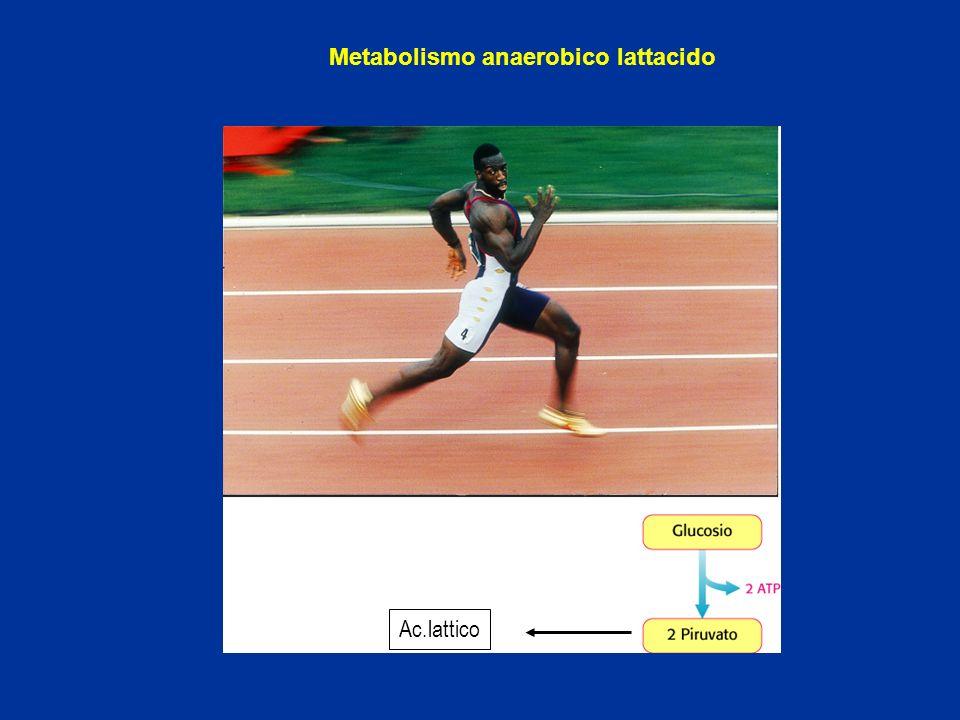 Metabolismo anaerobico lattacido
