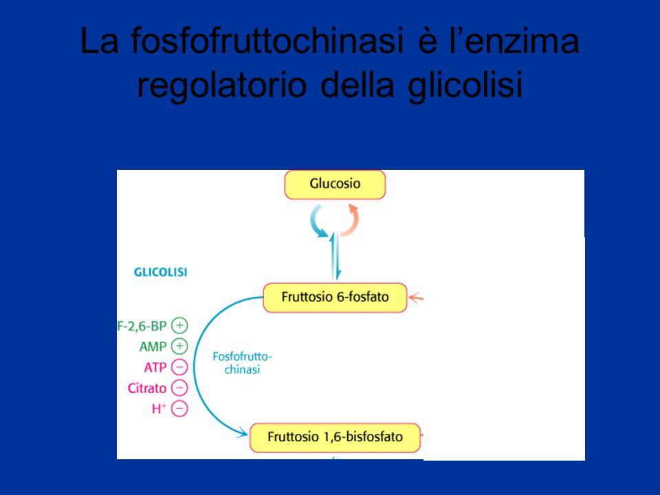 La fosfofruttochinasi è l'enzima regolatorio della glicolisi