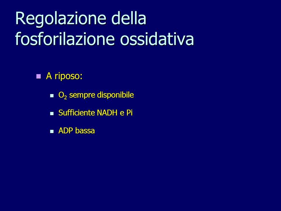 Regolazione della fosforilazione ossidativa