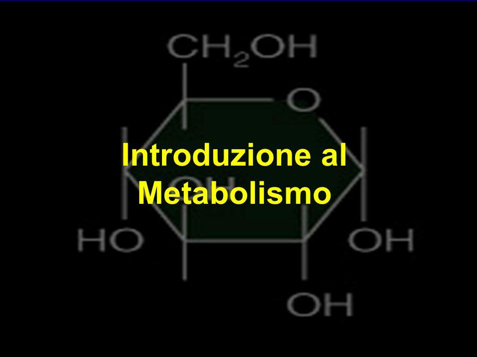 Introduzione al Metabolismo