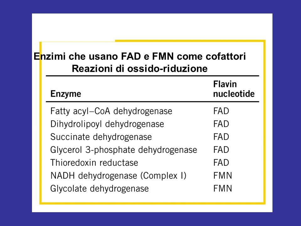 Enzimi che usano FAD e FMN come cofattori Reazioni di ossido-riduzione