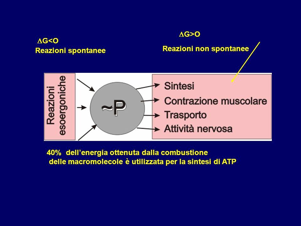 DG>ODG<O. Reazioni spontanee. Reazioni non spontanee. 40% dell'energia ottenuta dalla combustione.