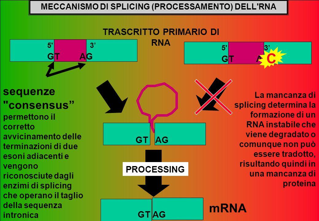 MECCANISMO DI SPLICING (PROCESSAMENTO) DELL RNA