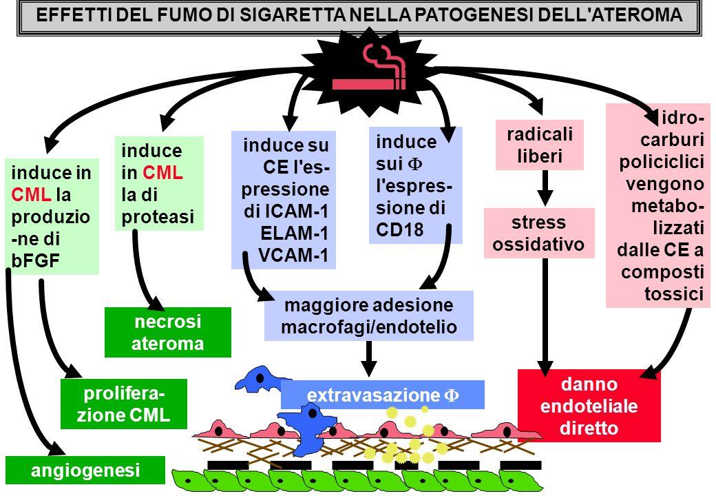 EFFETTI DEL FUMO DI SIGARETTA NELLA PATOGENESI DELL ATEROMA