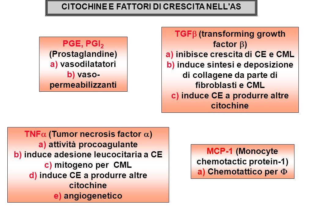 TGF (transforming growth factor) a) inibisce crescita di CE e CML