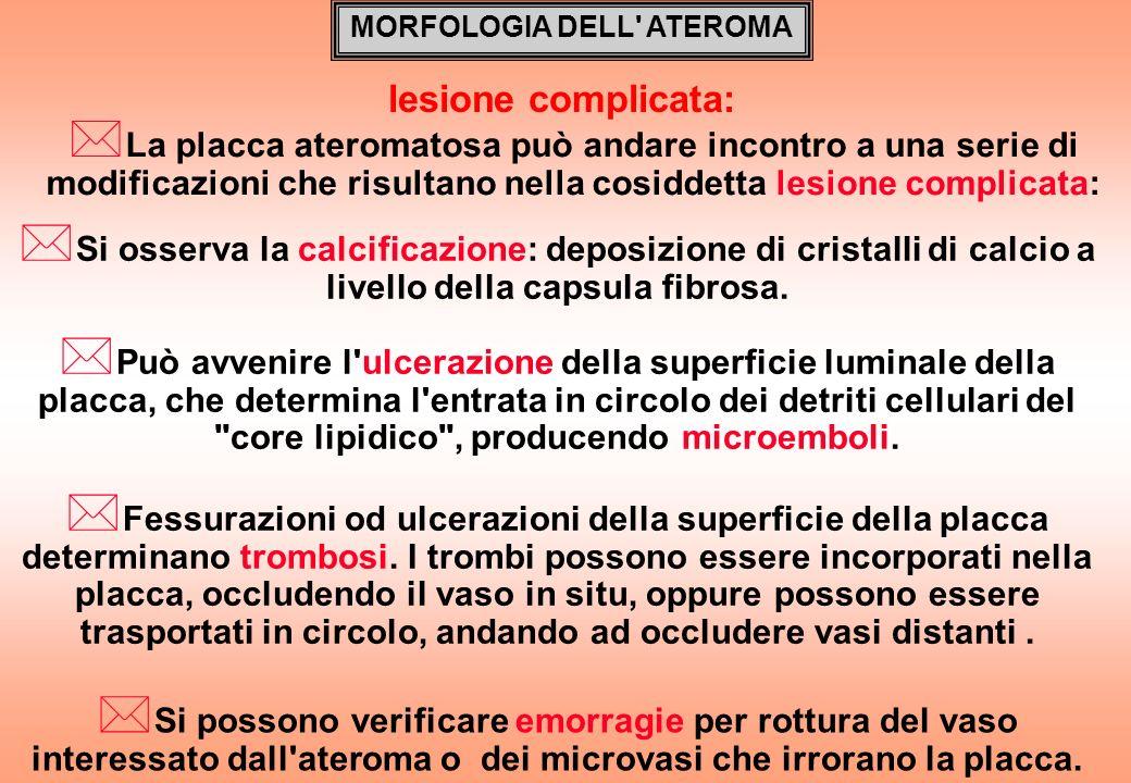 MORFOLOGIA DELL ATEROMA
