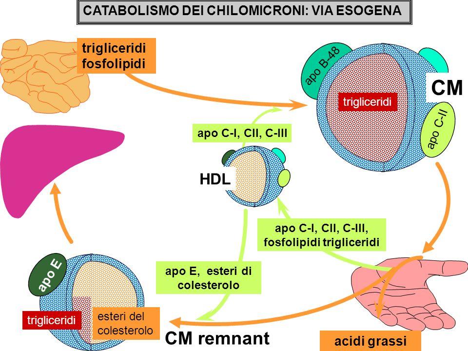 CM CM remnant HDL CATABOLISMO DEI CHILOMICRONI: VIA ESOGENA