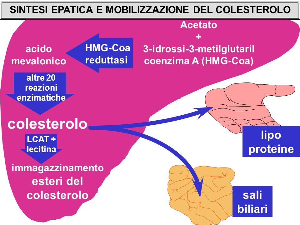 colesterolo lipo proteine sali biliari