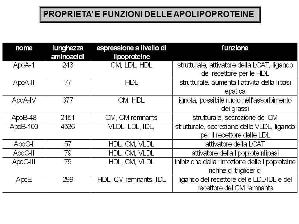 PROPRIETA' E FUNZIONI DELLE APOLIPOPROTEINE