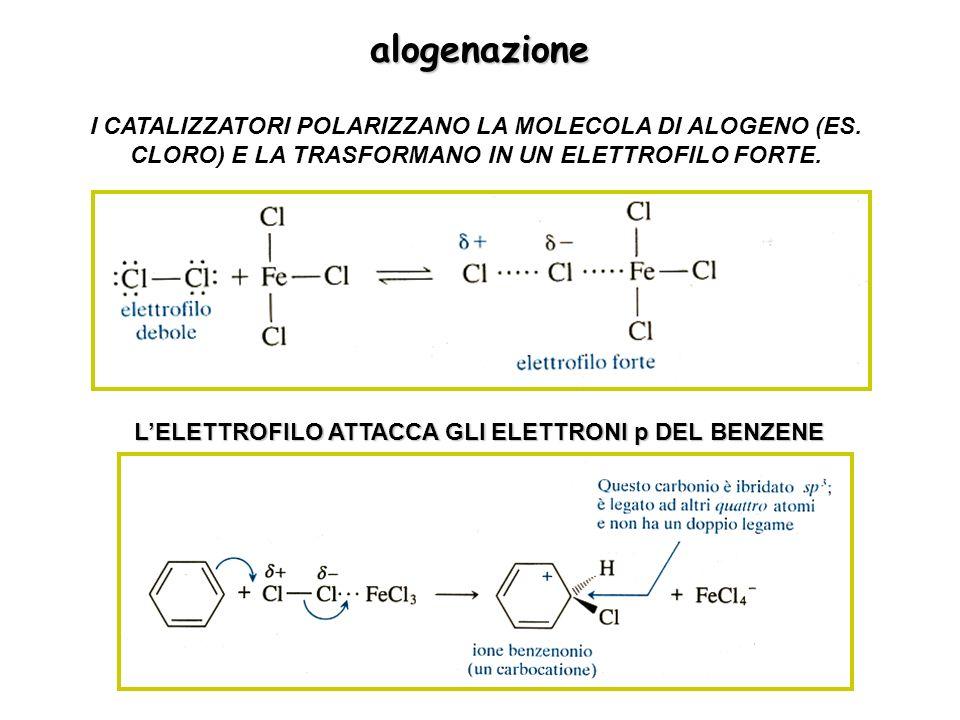 alogenazione I CATALIZZATORI POLARIZZANO LA MOLECOLA DI ALOGENO (ES. CLORO) E LA TRASFORMANO IN UN ELETTROFILO FORTE.