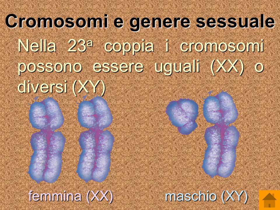 Cromosomi e genere sessuale