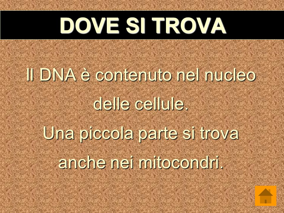 Dna ppt video online scaricare for Arredo ingross 3 dove si trova