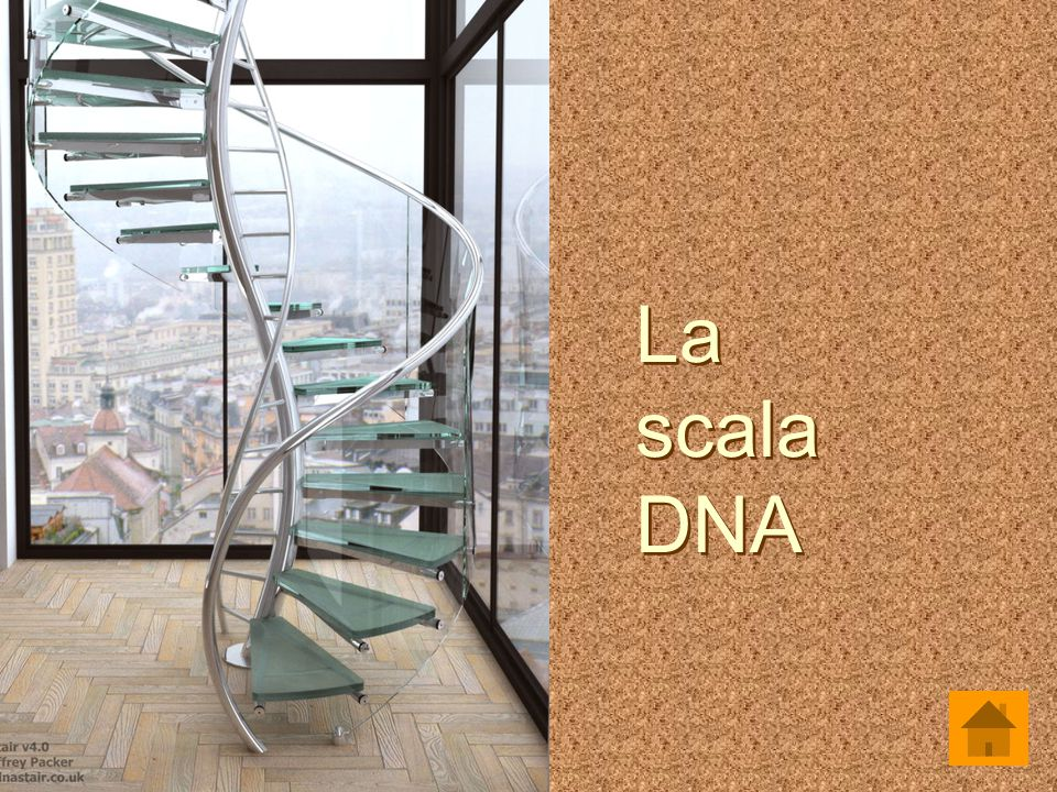 La scala DNA