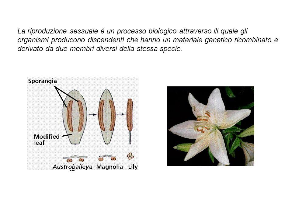 La riproduzione sessuale è un processo biologico attraverso ili quale gli