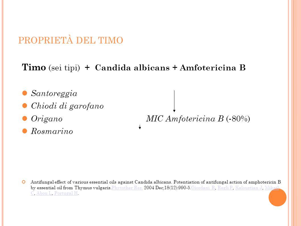 Timo (sei tipi) + Candida albicans + Amfotericina B