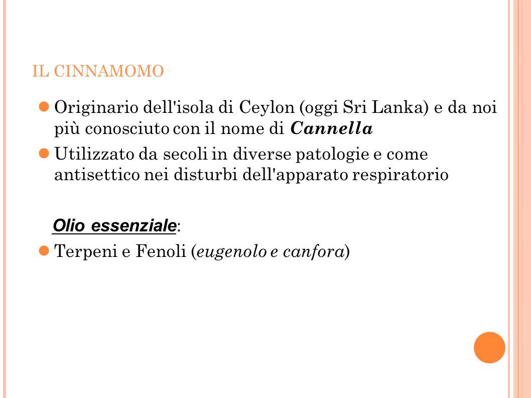 Terpeni e Fenoli (eugenolo e canfora)