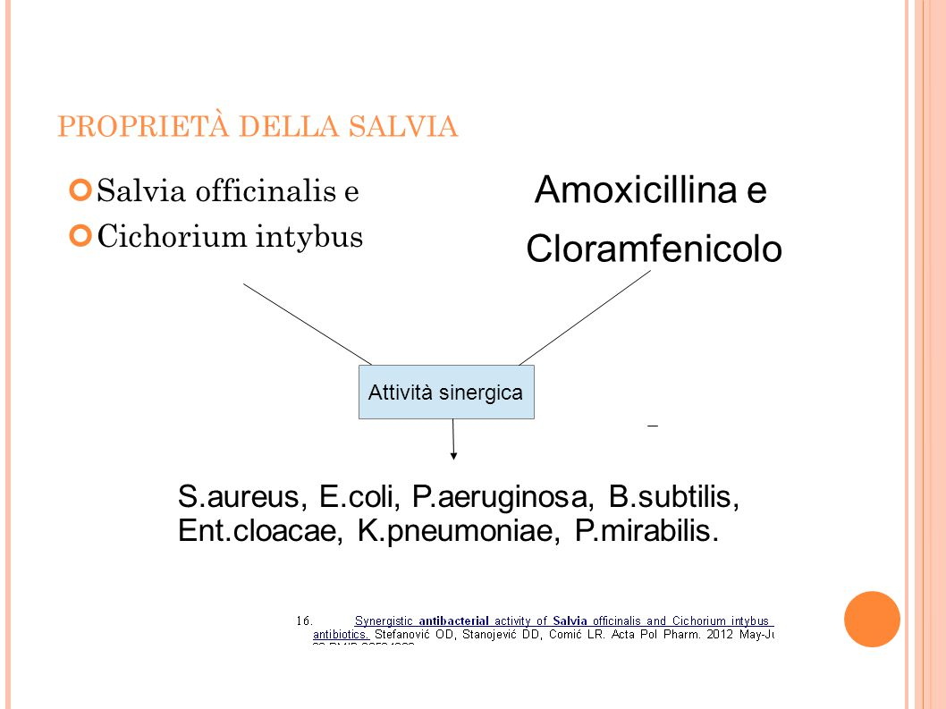 Amoxicillina e Cloramfenicolo Salvia officinalis e Cichorium intybus