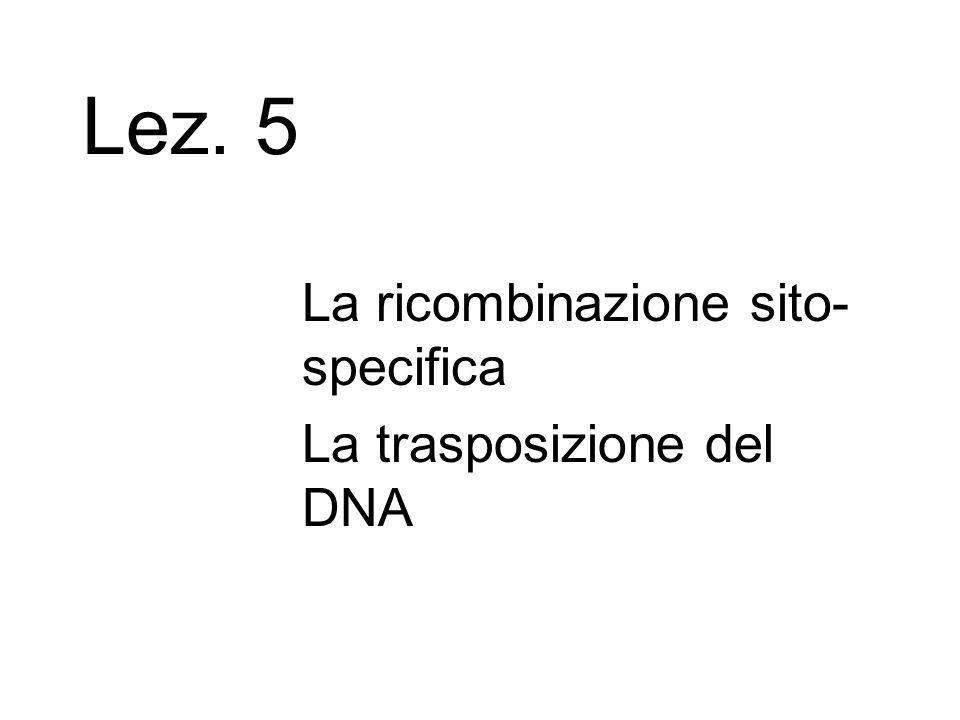 Lez. 5 La ricombinazione sito-specifica La trasposizione del DNA
