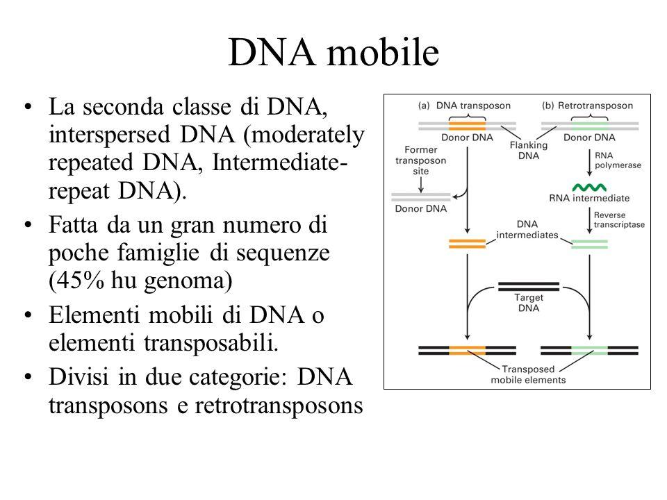DNA mobileLa seconda classe di DNA, interspersed DNA (moderately repeated DNA, Intermediate-repeat DNA).