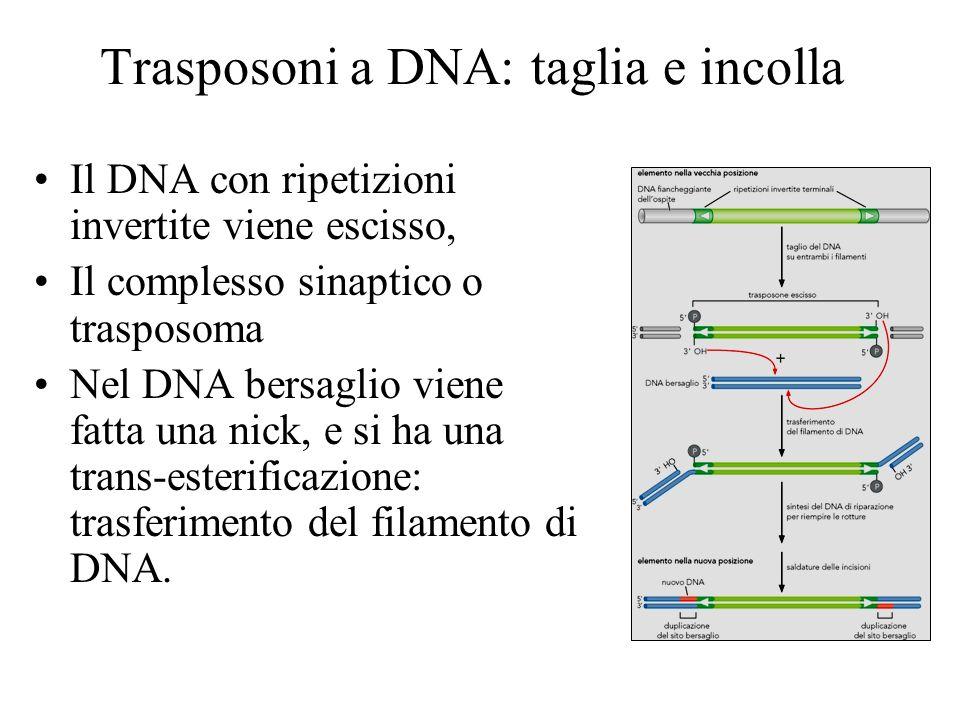 Trasposoni a DNA: taglia e incolla