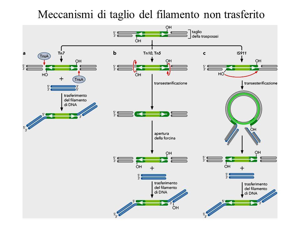 Meccanismi di taglio del filamento non trasferito