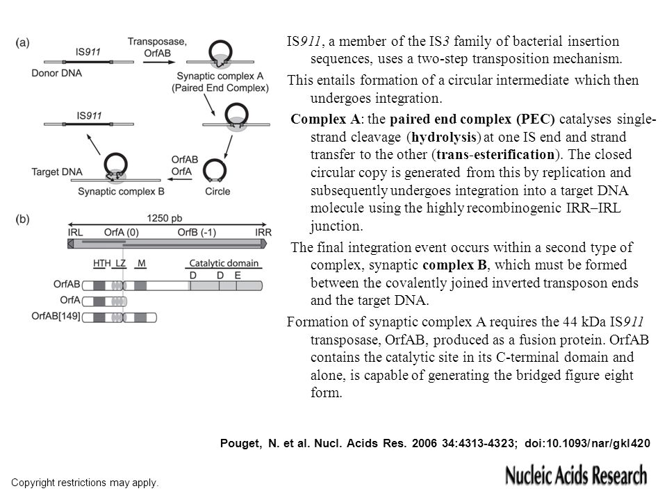 IS911, a member of the IS3 family of bacterial insertion sequences, uses a two-step transposition mechanism.