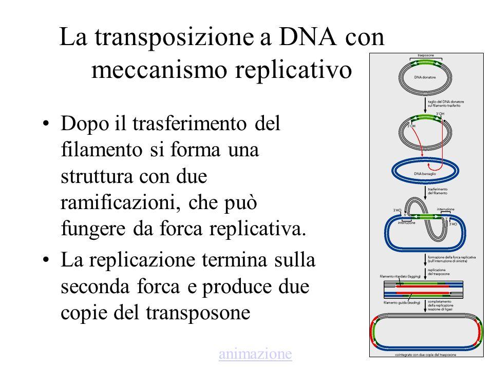 La transposizione a DNA con meccanismo replicativo