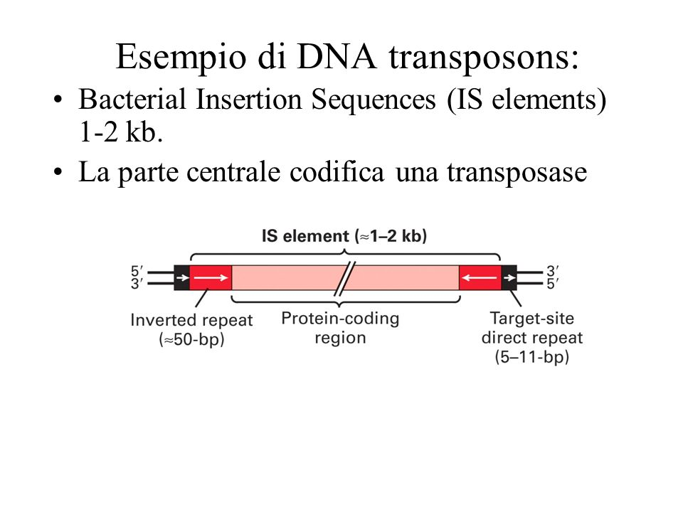 Esempio di DNA transposons: