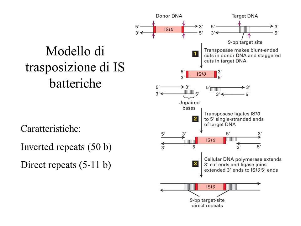 Modello di trasposizione di IS batteriche