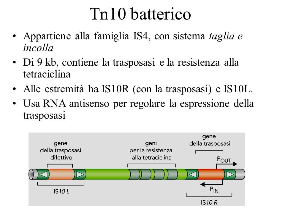 Tn10 batterico Appartiene alla famiglia IS4, con sistema taglia e incolla. Di 9 kb, contiene la trasposasi e la resistenza alla tetraciclina.