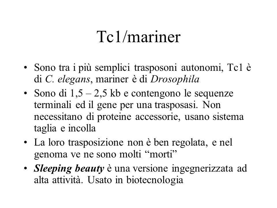 Tc1/mariner Sono tra i più semplici trasposoni autonomi, Tc1 è di C. elegans, mariner è di Drosophila.