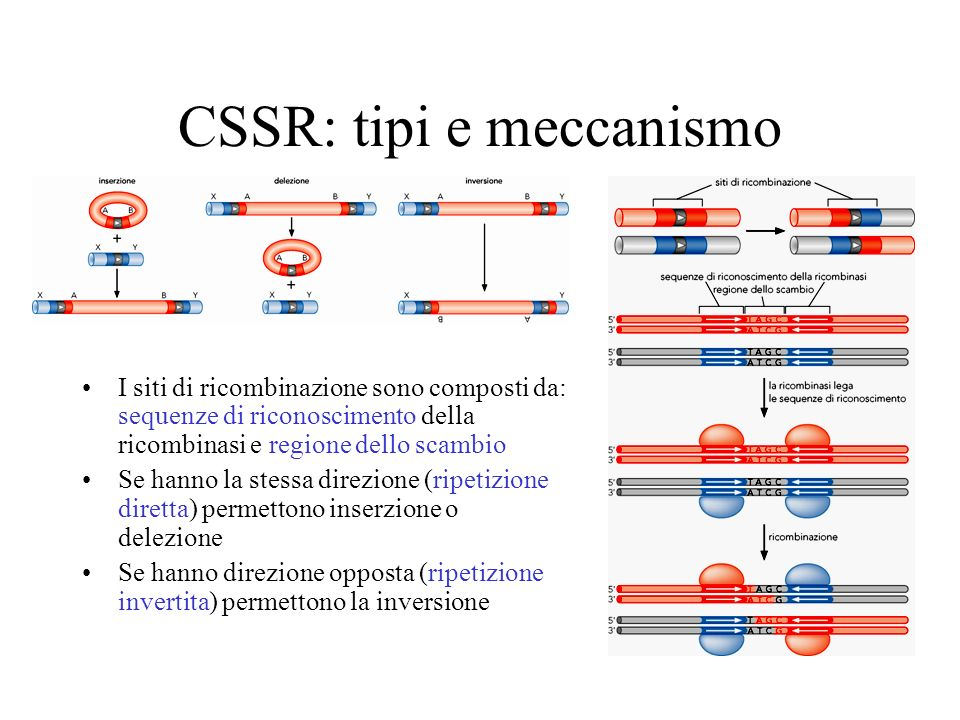CSSR: tipi e meccanismo