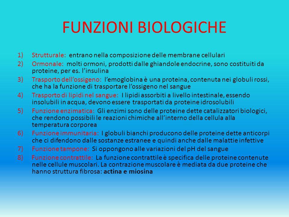 FUNZIONI BIOLOGICHE Strutturale: entrano nella composizione delle membrane cellulari.