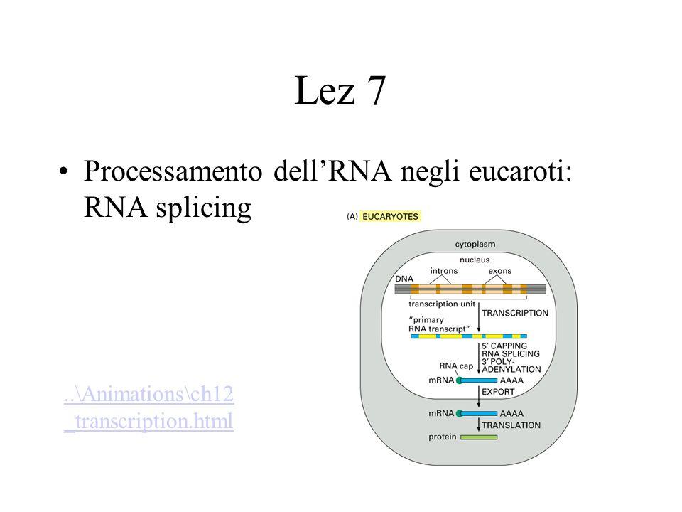 Lez 7 Processamento dell'RNA negli eucaroti: RNA splicing