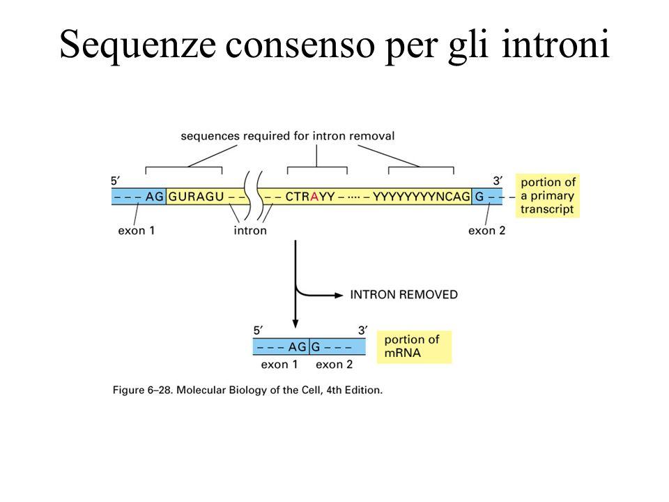 Sequenze consenso per gli introni