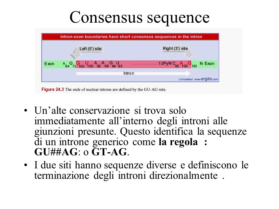 Consensus sequence