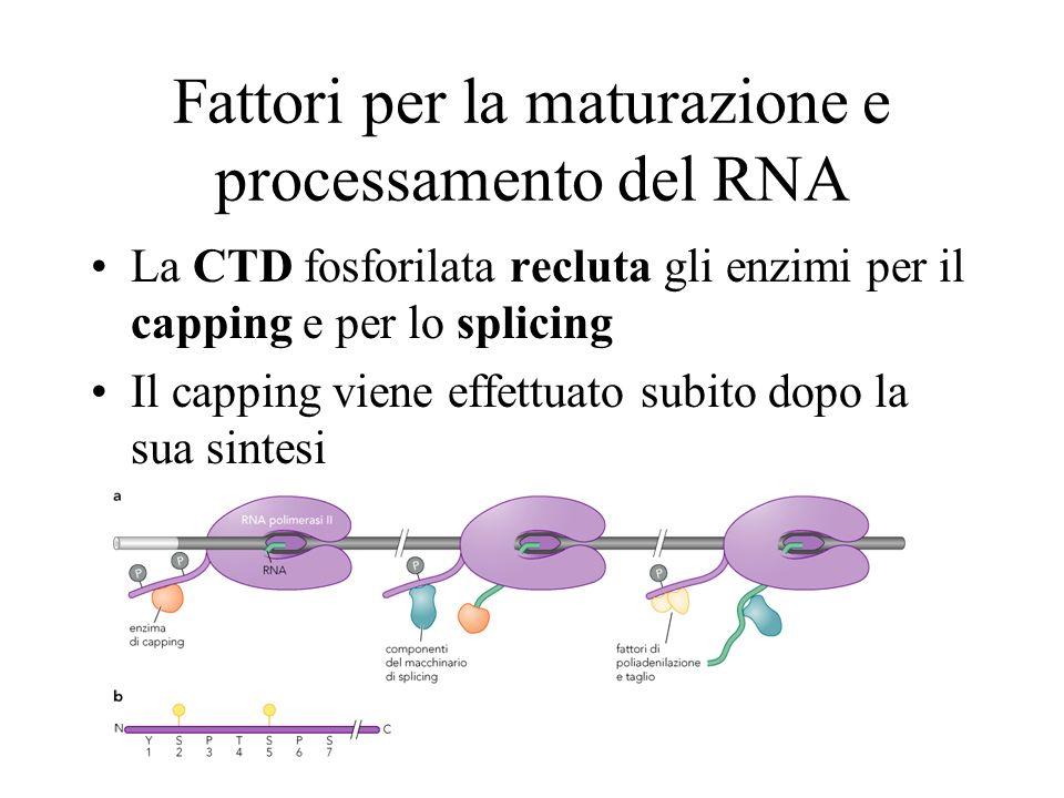 Fattori per la maturazione e processamento del RNA