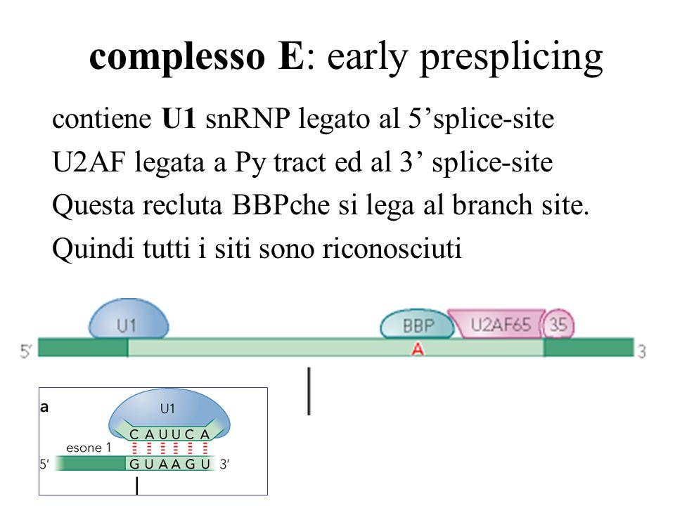 complesso E: early presplicing
