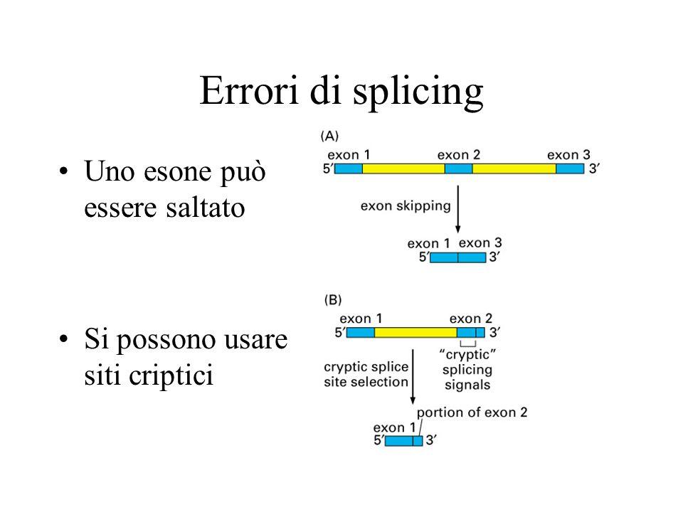 Errori di splicing Uno esone può essere saltato